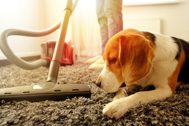 Best Vacuums for Pet Hair for Incredibly Tidy Furniture & Floors
