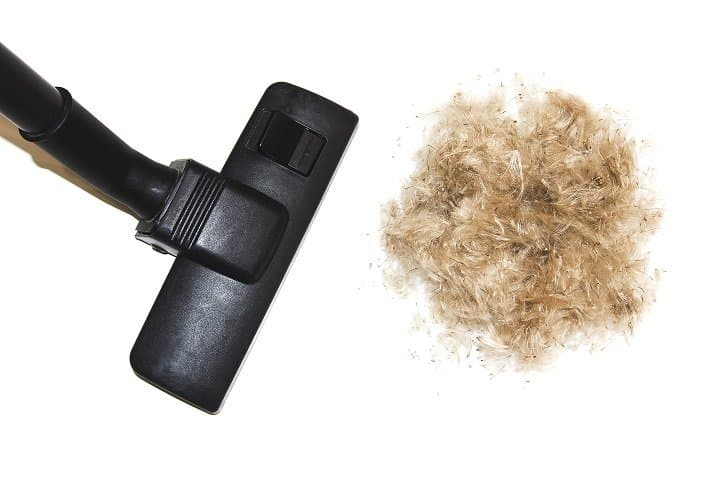 Vacuum for Pet Hair Vs Other Pet Hair Removing Tools
