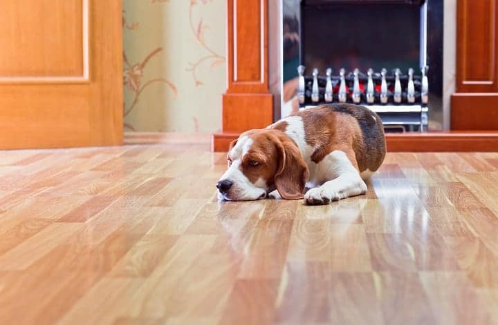 Why should I choose hardwood floors